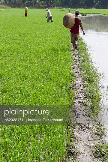 Rice paddy, Vietnam - p62322171f by Isabelle Rozenbaum