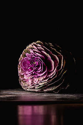 Ornamental cabbage - p1628m2230129 by Lorraine Fitch
