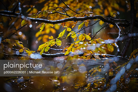 Tree branches in autumn - p300m2226331 by Michael Reusse (alt)