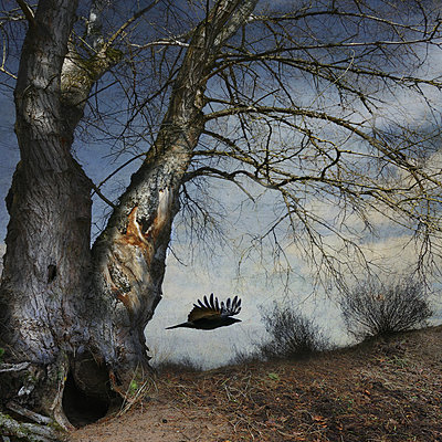 Black Winged Messenger Part XIV - p1633m2210063 by Bernd Webler