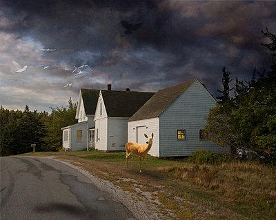 Traum in Maine - p1693m2292895 von Fran Forman
