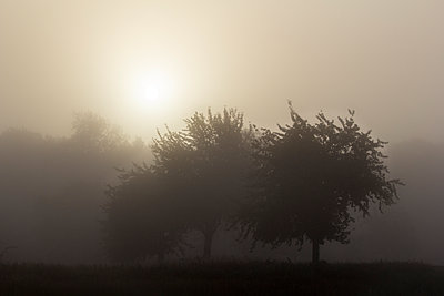 Bäume im Morgennebel - p739m1059280 von Baertels