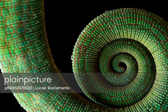 p840m2076022 von Lucas Bustamante