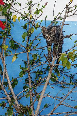Kitten climbing in tree - p1189m1218624 by Adnan Arnaout
