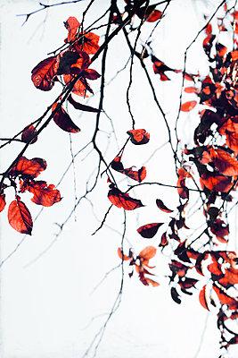 Herbstlaub    - p450m2192785 von Hanka Steidle