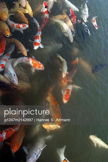 p1247m2142997 by Hannes S. Altmann