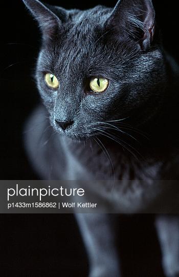 Britisch Kurzhaar - p1433m1586862 von Wolf Kettler