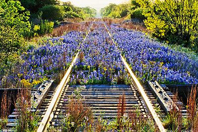 Blue Bonnets on Railroad Tracks - p1100m2090930 by Mint Images