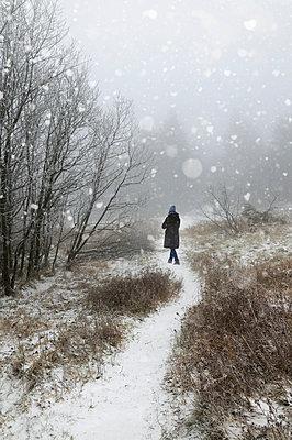 Snow flake - p470m1059317 by Ingrid Michel
