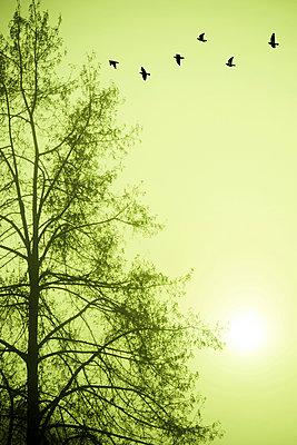 Vögel - p965m938473 von VCreative