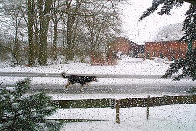 Zernien, Deutschland, 2001 - p9793272 von Vogt