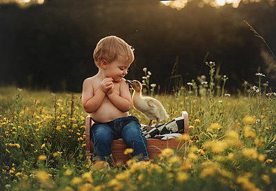 baby boy toddler in field with yellow flowers and duck duckling - p1166m2113287 by Cavan Images