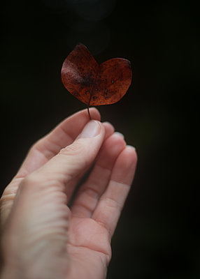 Person Holding Heart Leaf - p1503m2031839 by Deb Schwedhelm