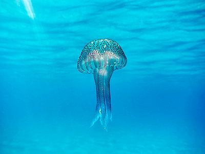 Underwater view of a jellyfish floating in the ocean. - p1100m1153316 by Mint Images