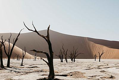 Namibia, Namib desert, Namib-Naukluft National Park, Sossusvlei, Deadvlei and Big Daddy Dune - p300m2080855 von letizia haessig photography