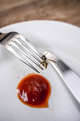 Wasp on a fork - p1402m2196209 by Jerome Paressant