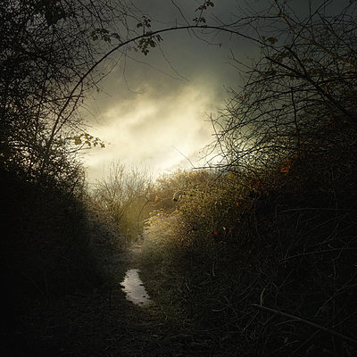Frozen Path - p1633m2210067 by Bernd Webler