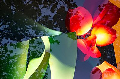 Kunstspiegelung - p195m2065421 von Sandra Pieroni