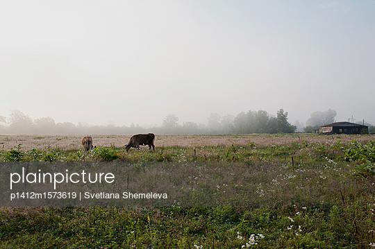 p1412m1573619 von Svetlana Shemeleva
