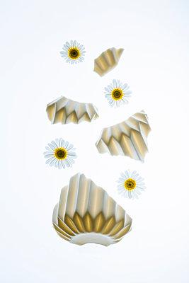Broken vase of flowers - p1149m2187970 by Yvonne Röder