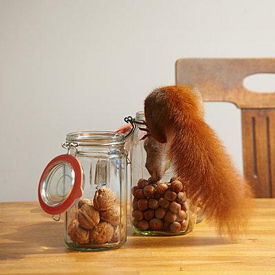 Eichhörnchen im Glas - p415m2173861 von Tanja Luther
