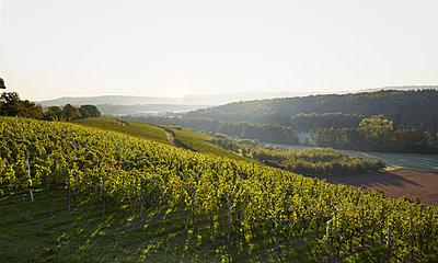 Weinberge bei Sonnenaufgang - p1272m1083373 von Steffen Scheyhing
