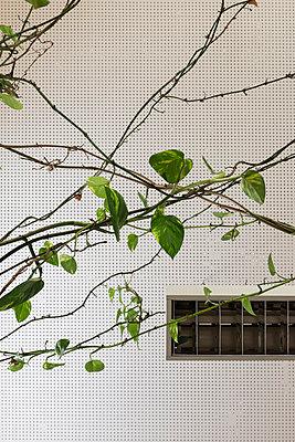 Büropflanze - p646m946177 von gio