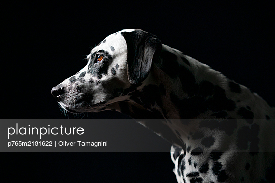 p765m2181622 by Oliver Tamagnini