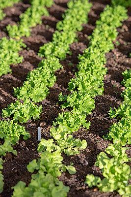Salad - p1057m2057290 by Stephen Shepherd