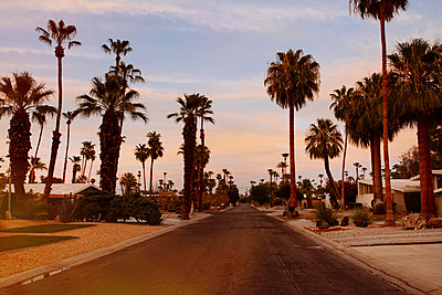Palm trees and suburban road, Palm Springs, California, USA - p429m1014644 by Kate Ballis