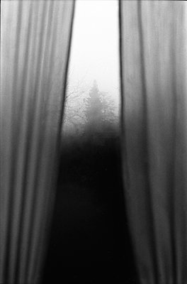 View through a window of trees in the fog - p1648m2228458 by KOLETZKI