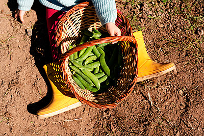 Crop view of little girl sitting on ground with basket of harvested pea pods - p300m2188628 by Gemma Ferrando