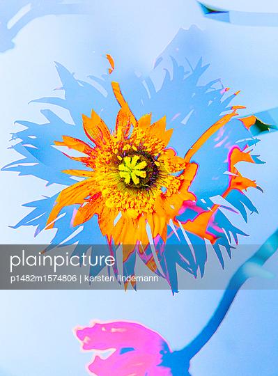 Pflanzen - p1482m1574806 von karsten lindemann