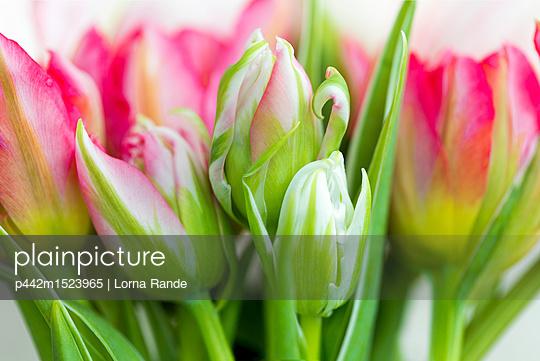 p442m1523965 von Lorna Rande