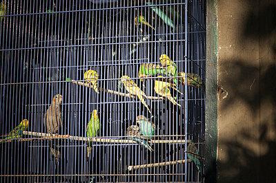Vögel - p171m854019 von Rolau
