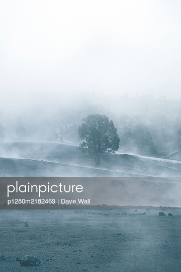 Lava field with single tree in the fog - p1280m2182469 by Dave Wall