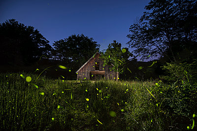Old log cabin amidst trees growing in forest against clear sky at dusk - p1166m1193990 by Cavan Images