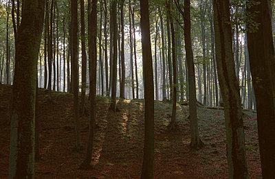 Waldlichtung - p2120021 von Edith M. Balk