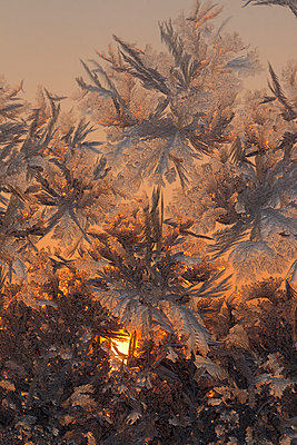 Ice flowers at the window - p1251m1108965 by Heikki Tabell