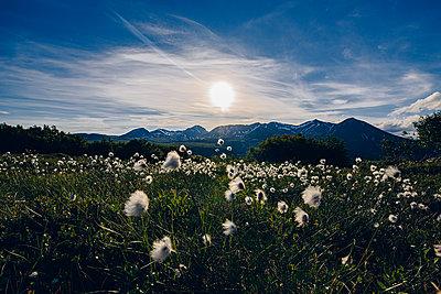 Wollgras in einer Berglandschaft - p1455m2204824 von Ingmar Wein