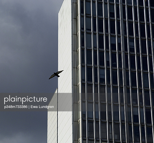 Flying bird and multi-storey buildings, Stockholm, Sweden, 2007