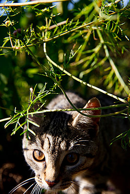 Little cat - p2280639 by photocake.de