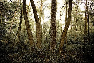 Deutschland, Wald, Baeume, Renaturierung - p416m784706 von Albrecht Schlotter