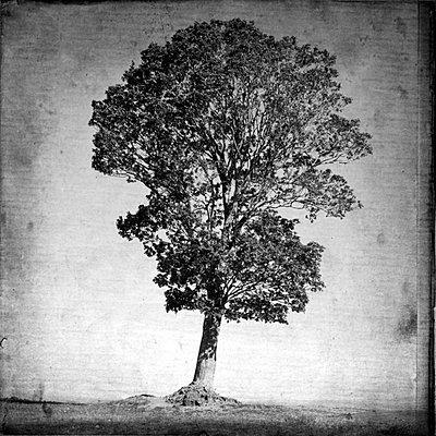 Single tree - p8130312 by B.Jaubert