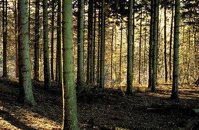 Forrest - p0190150 by Hartmut Gerbsch