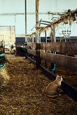 Cat in a stable - p1573m2272541 by Christian Bendel