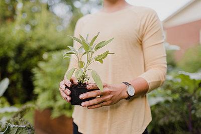 Woman gardener tending to seedlings - p429m2145901 by Sara Monika
