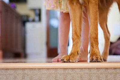 Caucasian girl standing with puppy at edge of step - p555m1409723 by Shestock