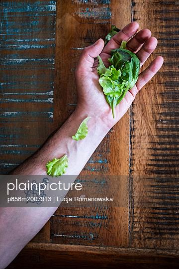Salat füttern - p858m2007913 von Lucja Romanowska