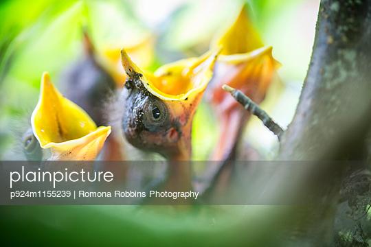 p924m1155239 von Romona Robbins Photography